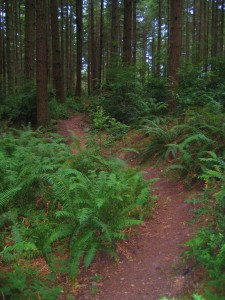Miles of forested singletrack