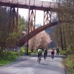 Daffodil Classic bike tour